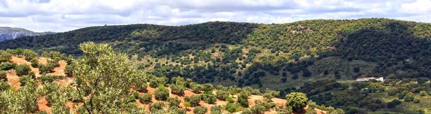 Montexaquez Oliva